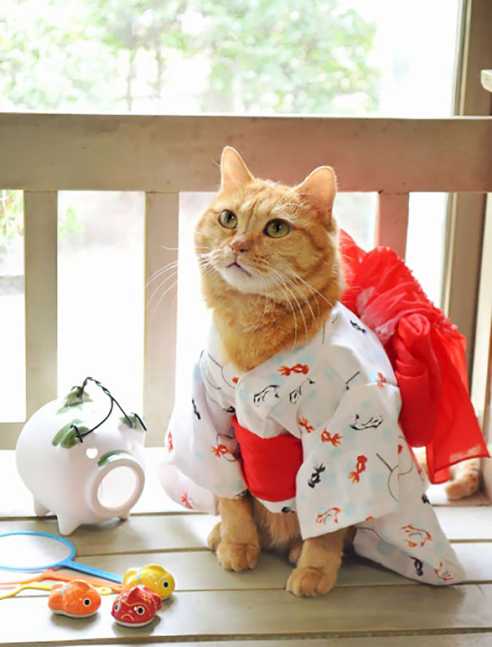 cats-in-kimonos-are-a-thing-in-japan1