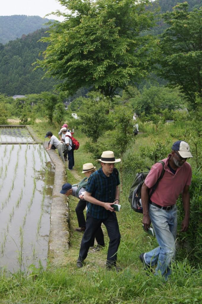Hailstones hunting down haiku in Ohara, Kyoto, June 2010