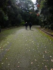 Path from Kammu to Meiji