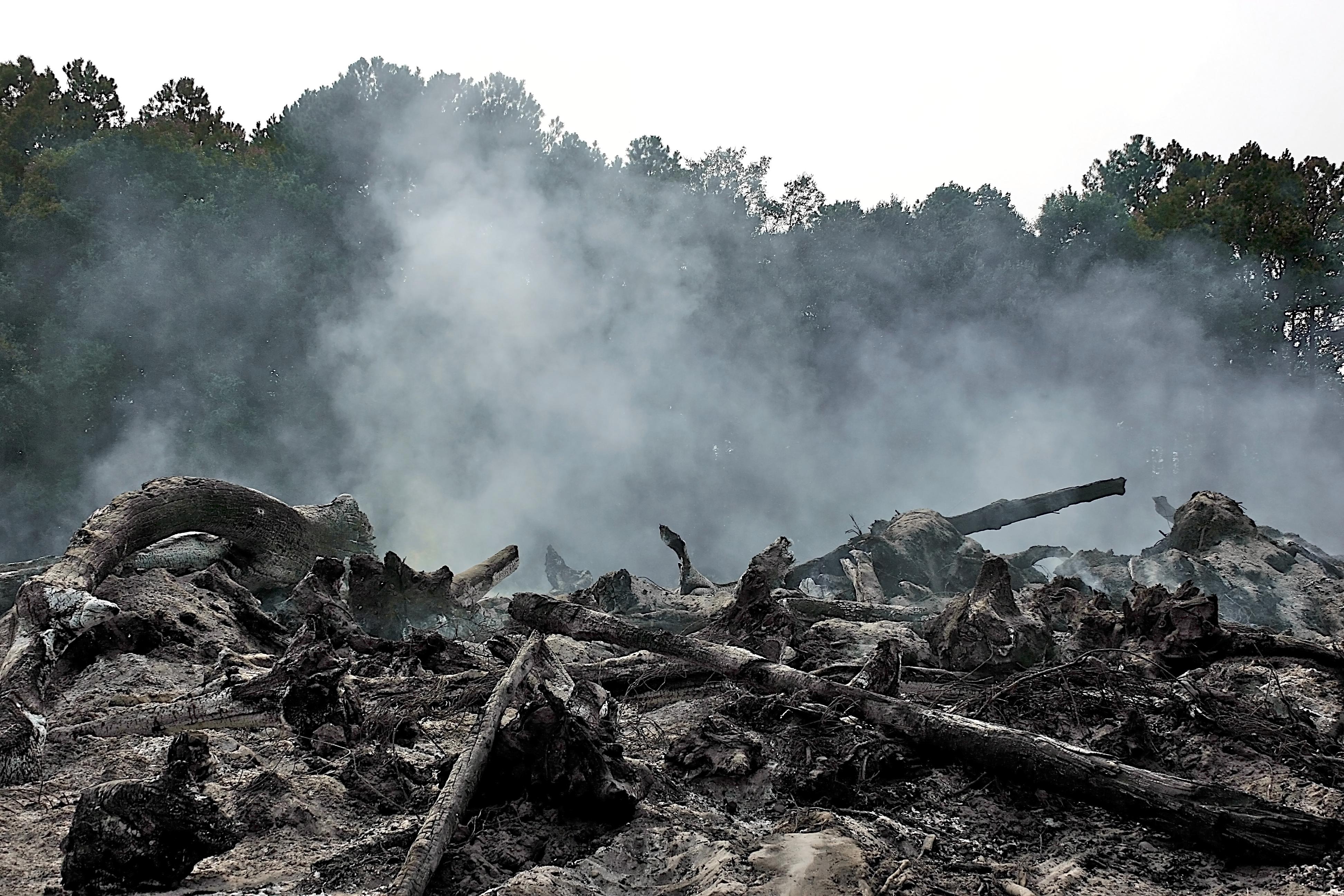 burning-pines-georgia
